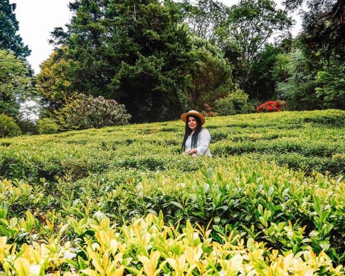 Tregothnan Estate | Tregothnan tea plantation
