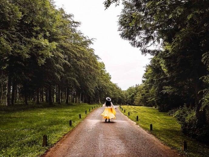 Tregothnan Europes longest driveway