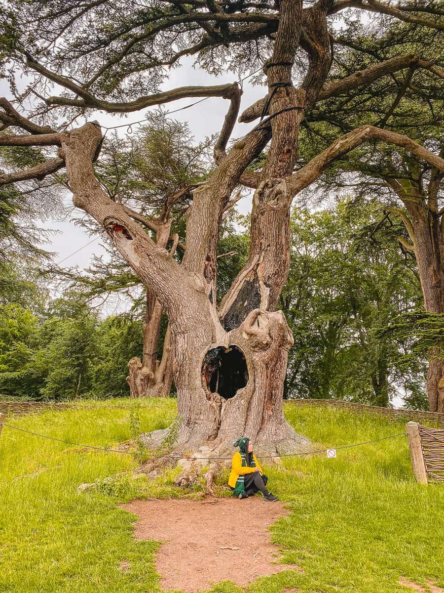 The Harry Potter Tree Blenheim Palace