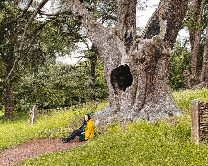 The Harry Potter Tree Things to do in Woodstock UK