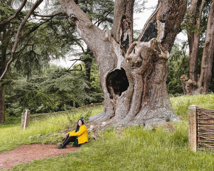 The Harry Potter Tree Blenheim Palace FREE