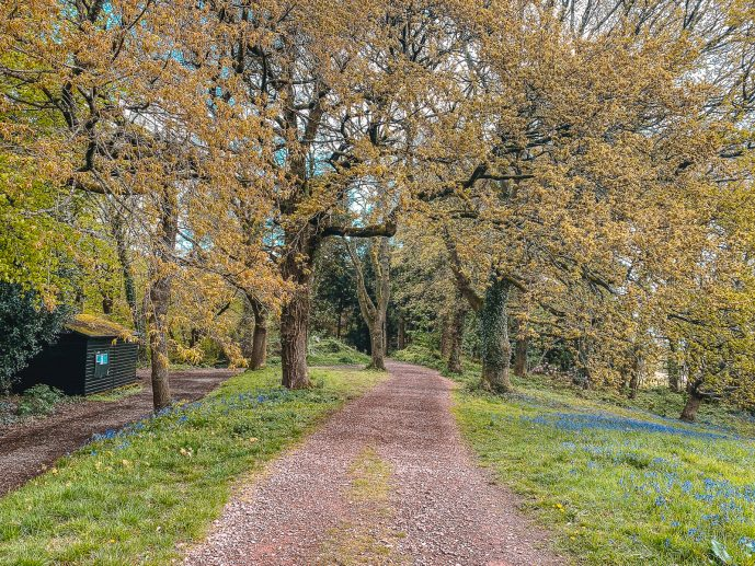 the Kymin woods National Trust