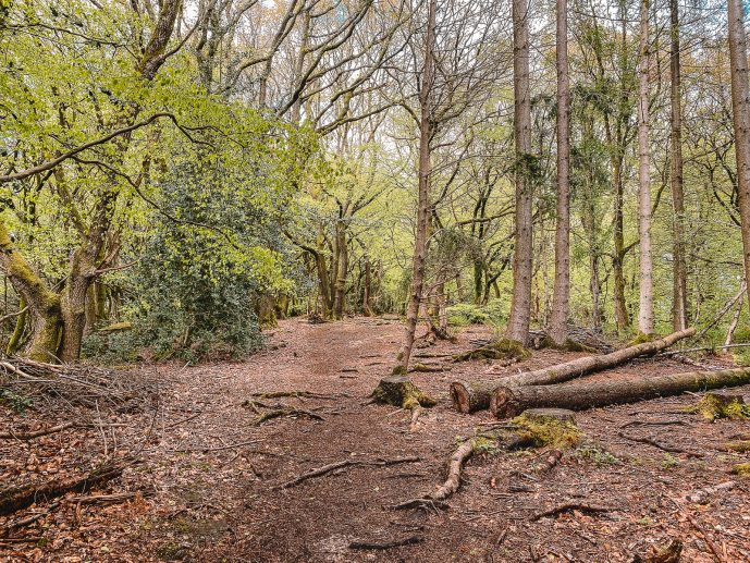 Beaulieu Woods the Kymin