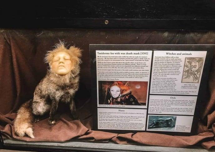 Taxidermy fox with death mask