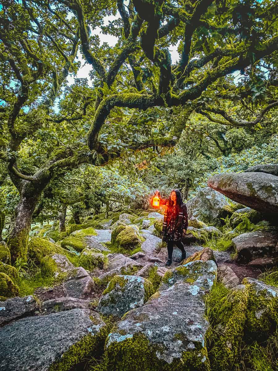 Wistman's Wood Dartmoor National Park