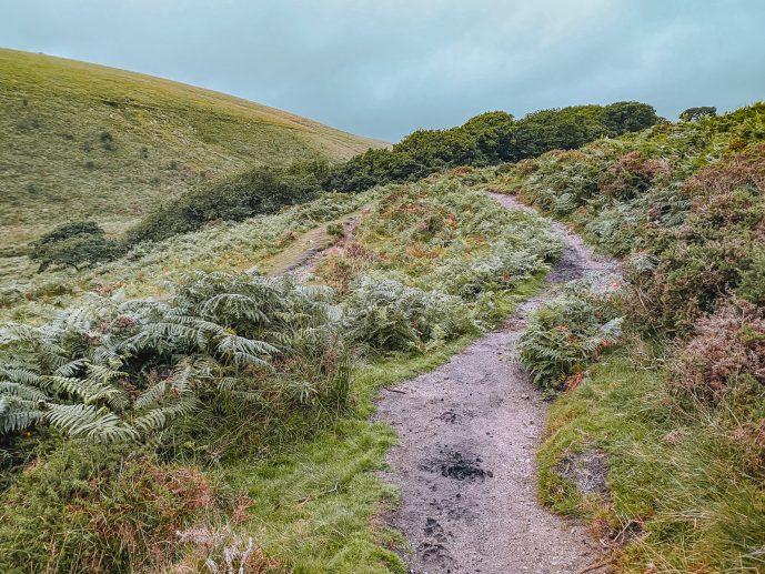 the muddy path on Wistman's Wood walk