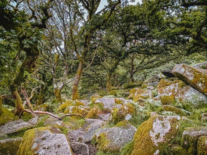 Wistman's Wood Walk Dartmoor National Park