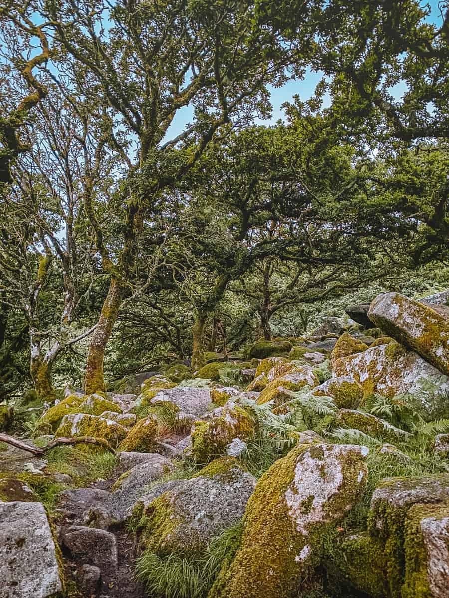 Wistmans Wood Dartmoor National PArk