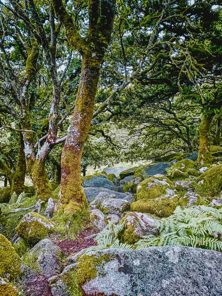 Wistmans Wood walk Dartmoor