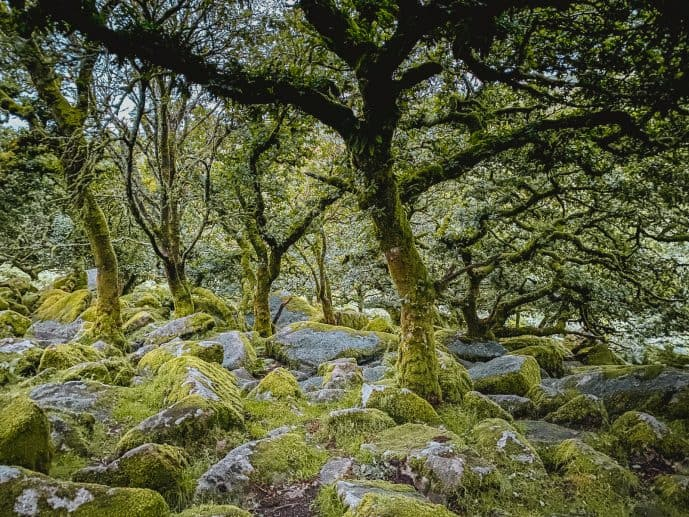 Wistmans Wood Photography
