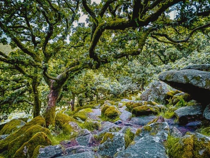 legends of wistmans wood dartmoor