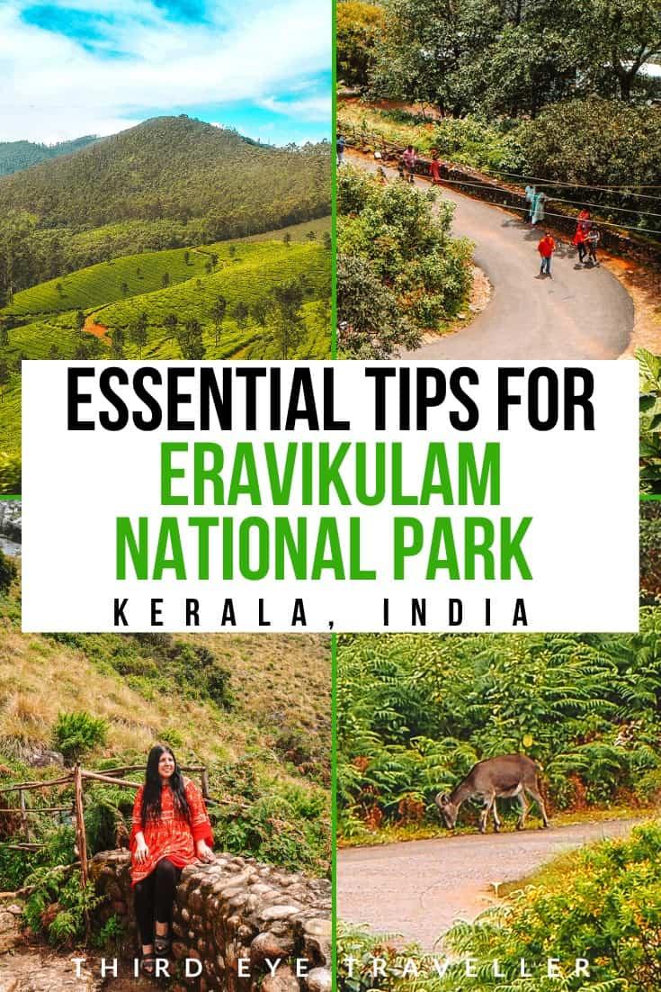 Eravikulam National Park Guide Tips