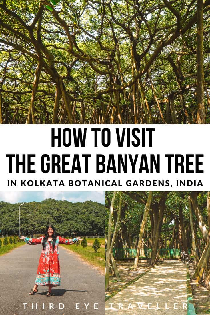 The Great Banyan Tree Kolkata Botanical Gardens