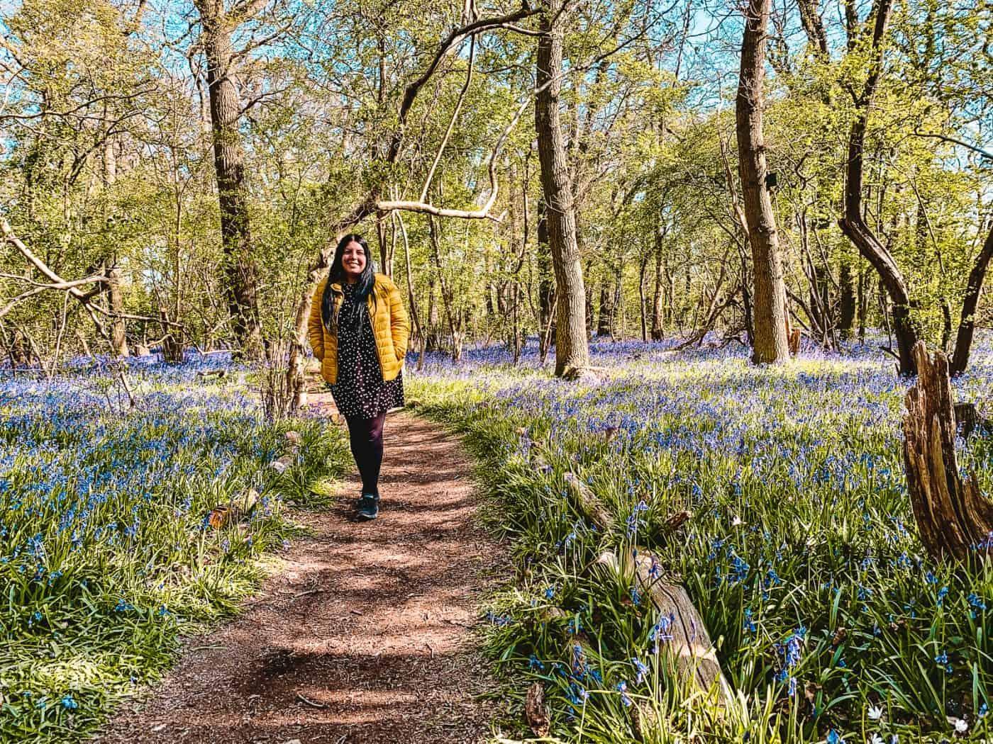 Hagbourne Copse Nature Reserve Bluebells Swindon