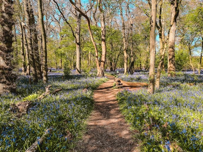 Swindon Bluebells Wood