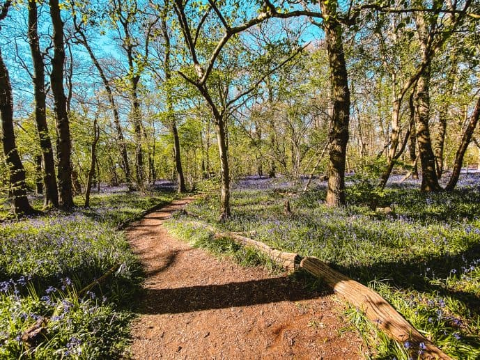Hagbourne Copse Nature Reserve Swindon