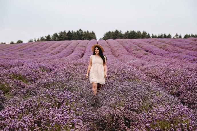 Things to do in Snowshill Cotswold Lavender Field!