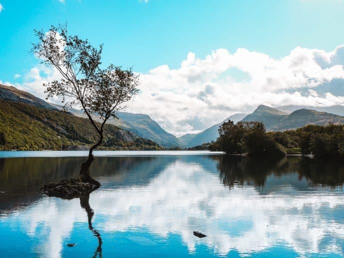 The Lonely Tree Llanberis Llyn Padarn