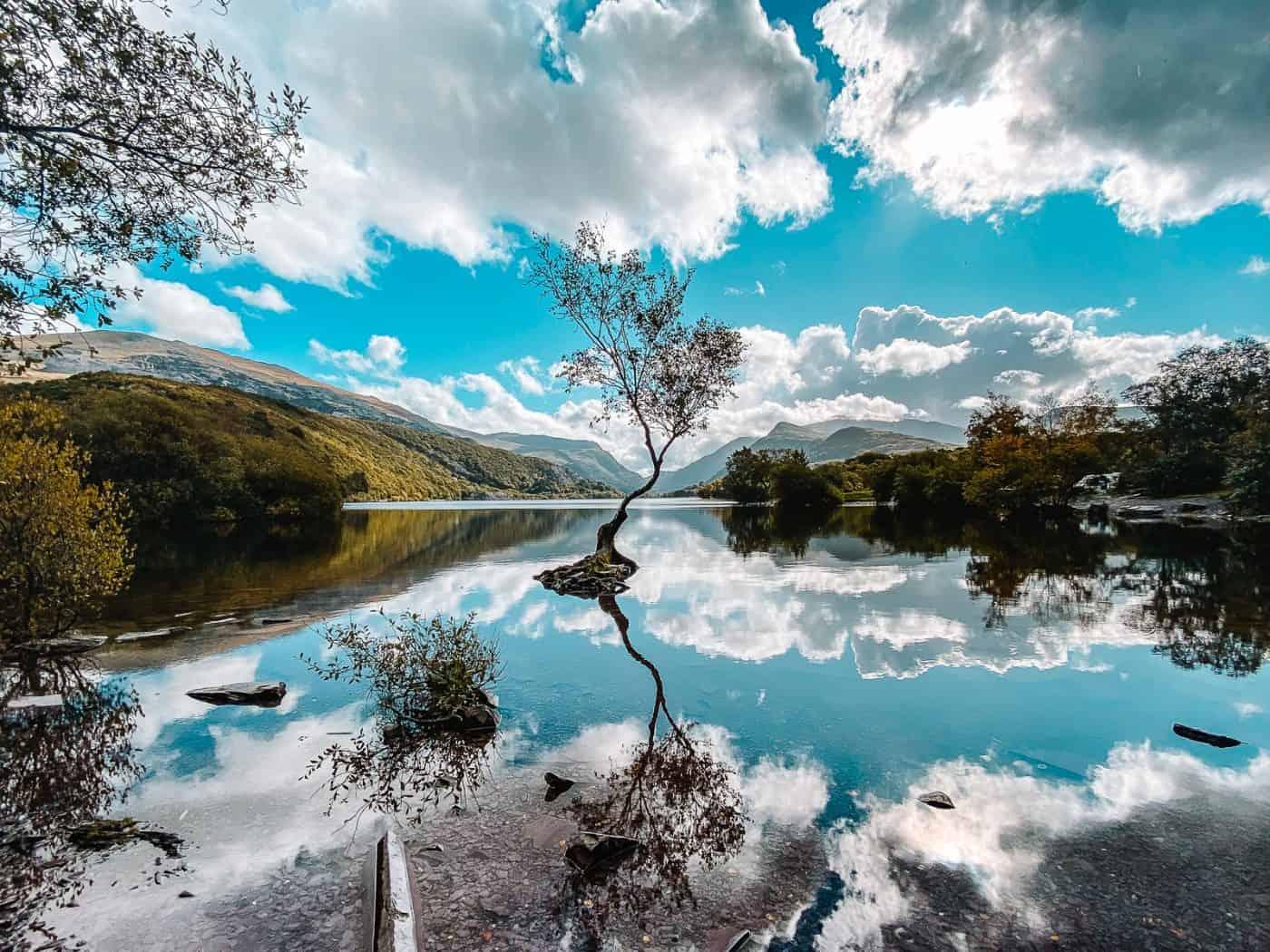 Lonely Tree Llanberis Location Llyn Padarn Snowdonia