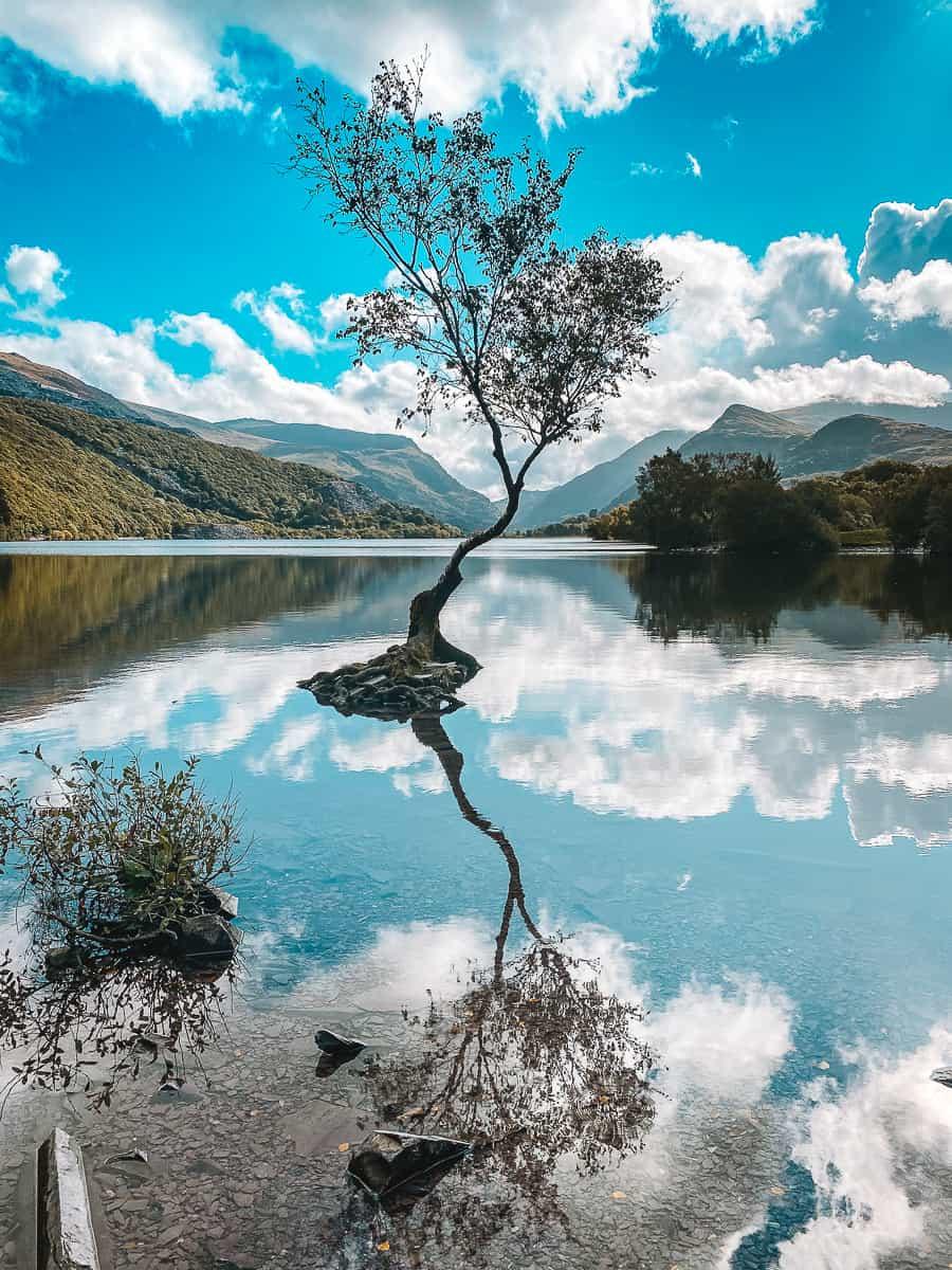 The Lonely Tree Llanberis