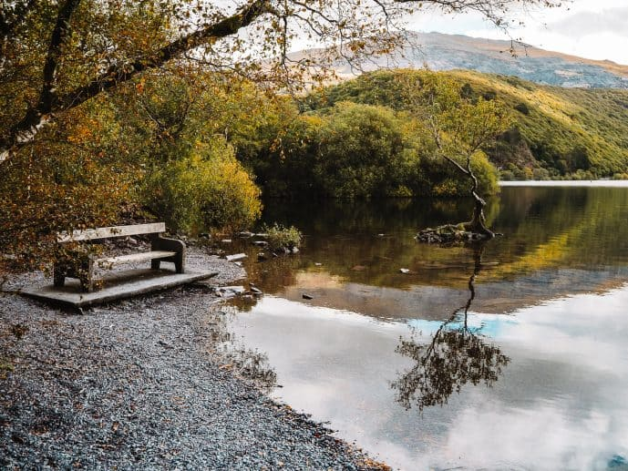 The bench near the Lone Tree of Snowdonia Llyn Padarn