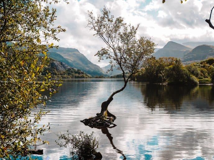Lonely Tree Llyn Padarn Location Snowdonia