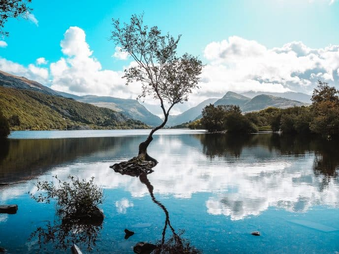 The Lonely Tree Snowdonia National Park