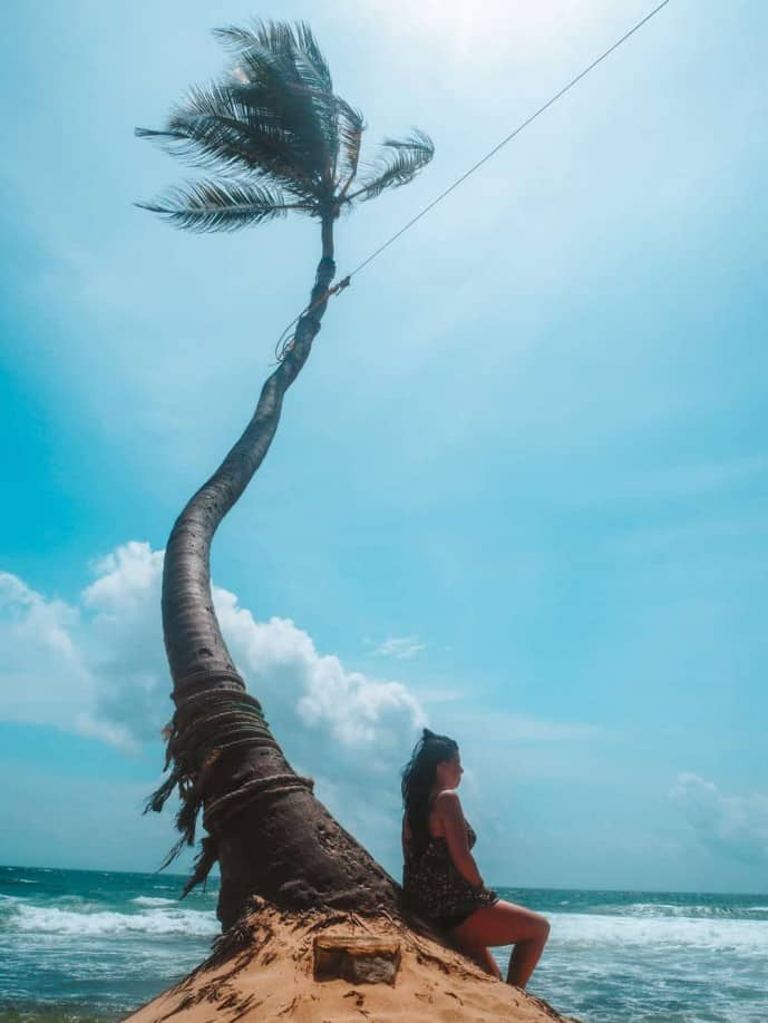Palm Tree Rope Swing Sri Lanka