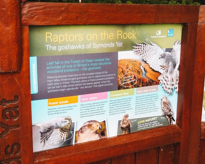 Raptors on the Rock Symonds Yat