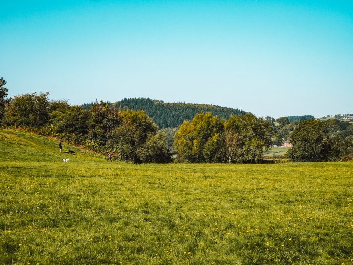 The meadow of the Warren