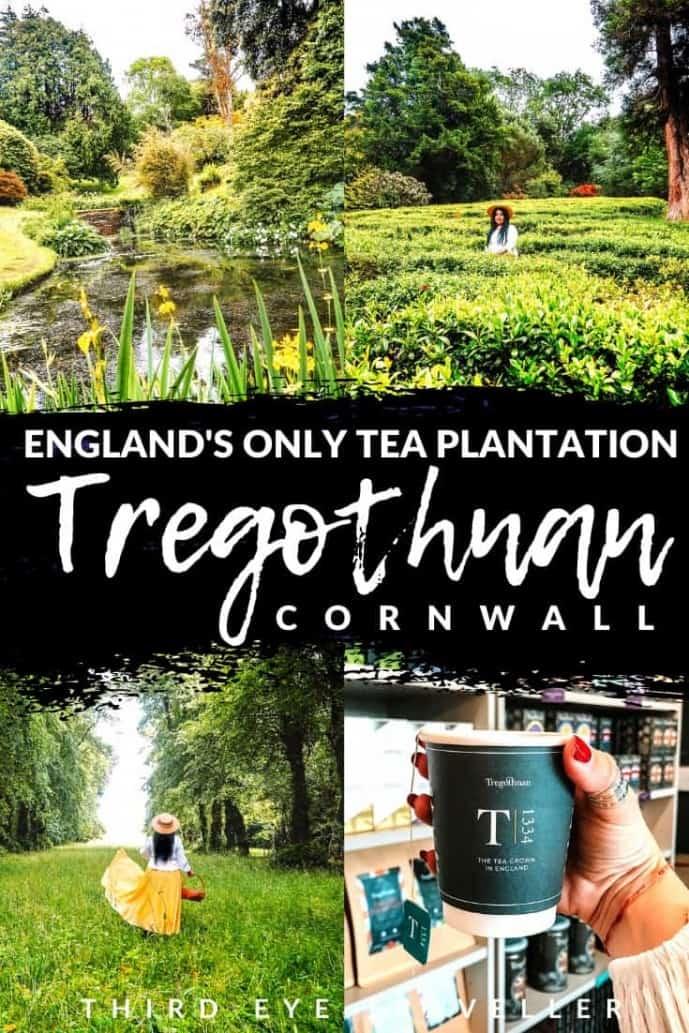 Tregothnan Estate Cornwall