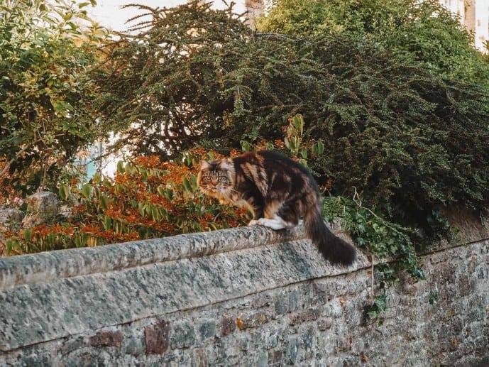 Vicars Close Cat