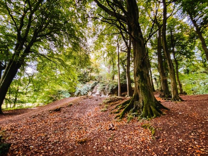 Lord's Wood Biblins The Doward Wye Valley Wales